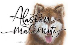 Alaskan malamute illustration 2
