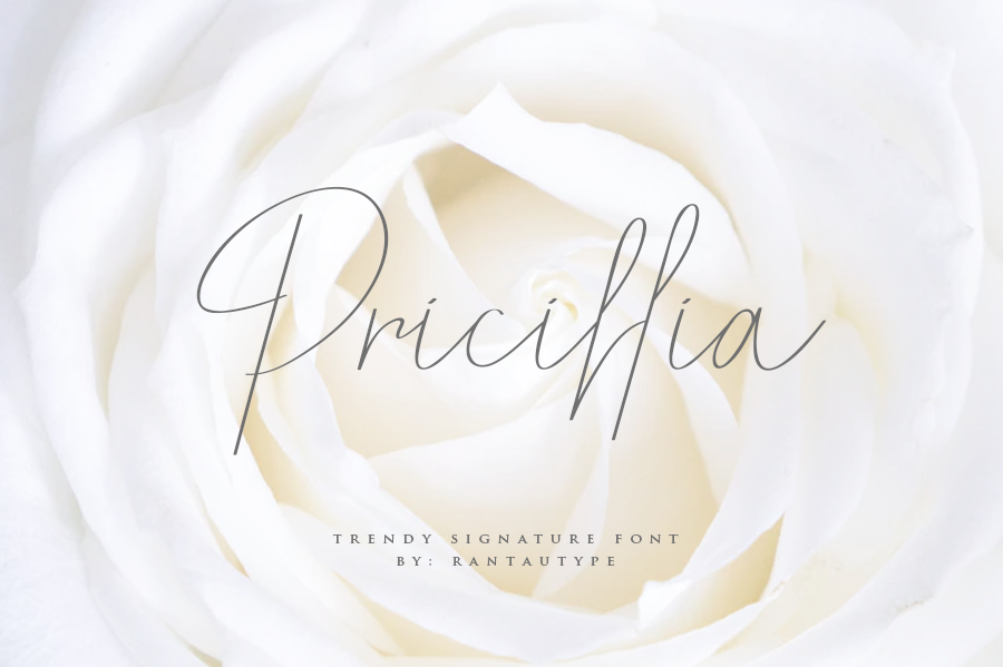 Pricillia illustration 11